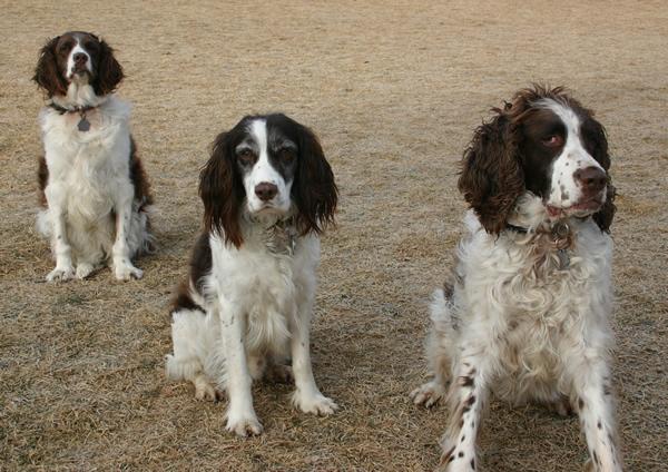 Marley, Eddy, Billy